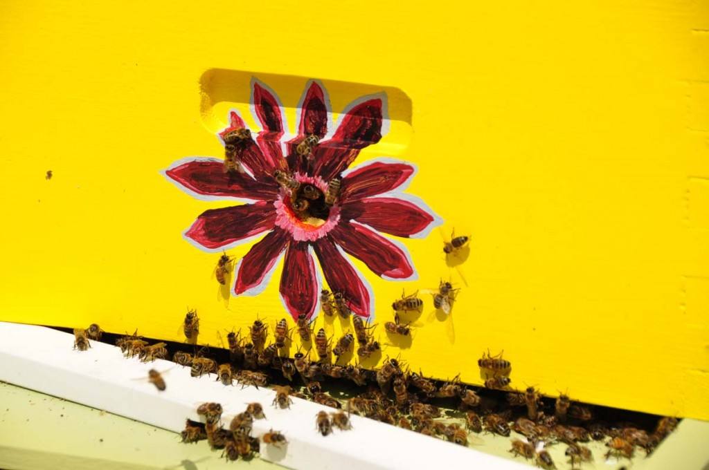 Bees & Blooms, Plant and Pollinators
